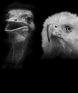 Eagle or Ostrich?